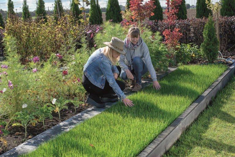 green-grass-from-grass-roll