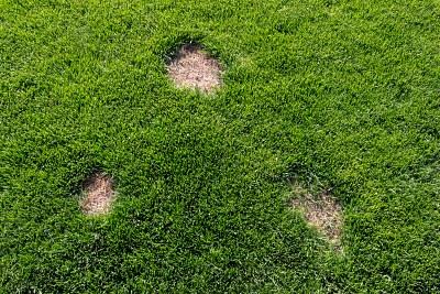 Увредена тревна настилка в двора